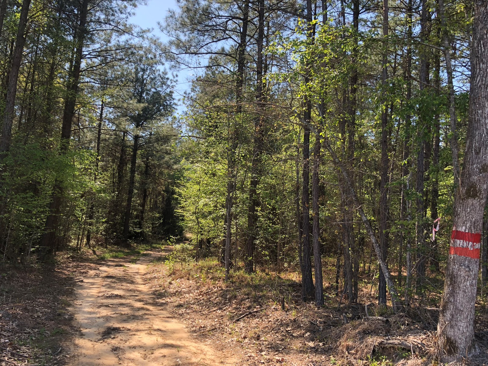 Southern Arkansas Investment Pine Timber Land for Sale