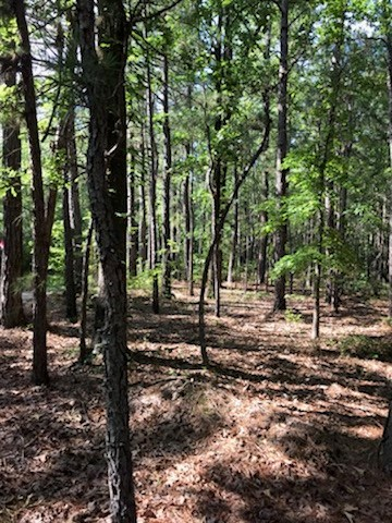 Young Pine/Hardwood Timber Land for Sale in Calhoun Co., AR