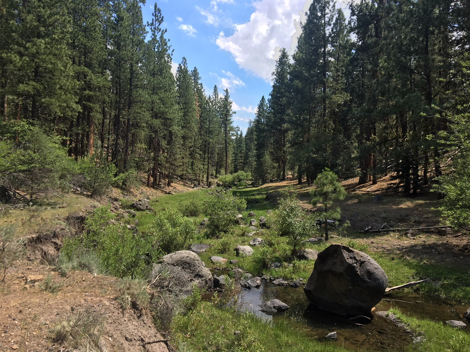 80 acres with trees and Willow Creek, Willow Ranch, CA