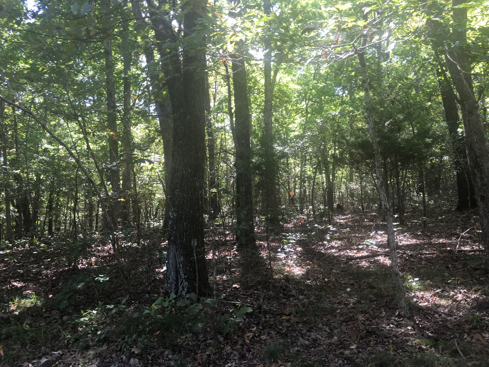 LAND FOR SALE IN NORTHEAST ARKANSAS