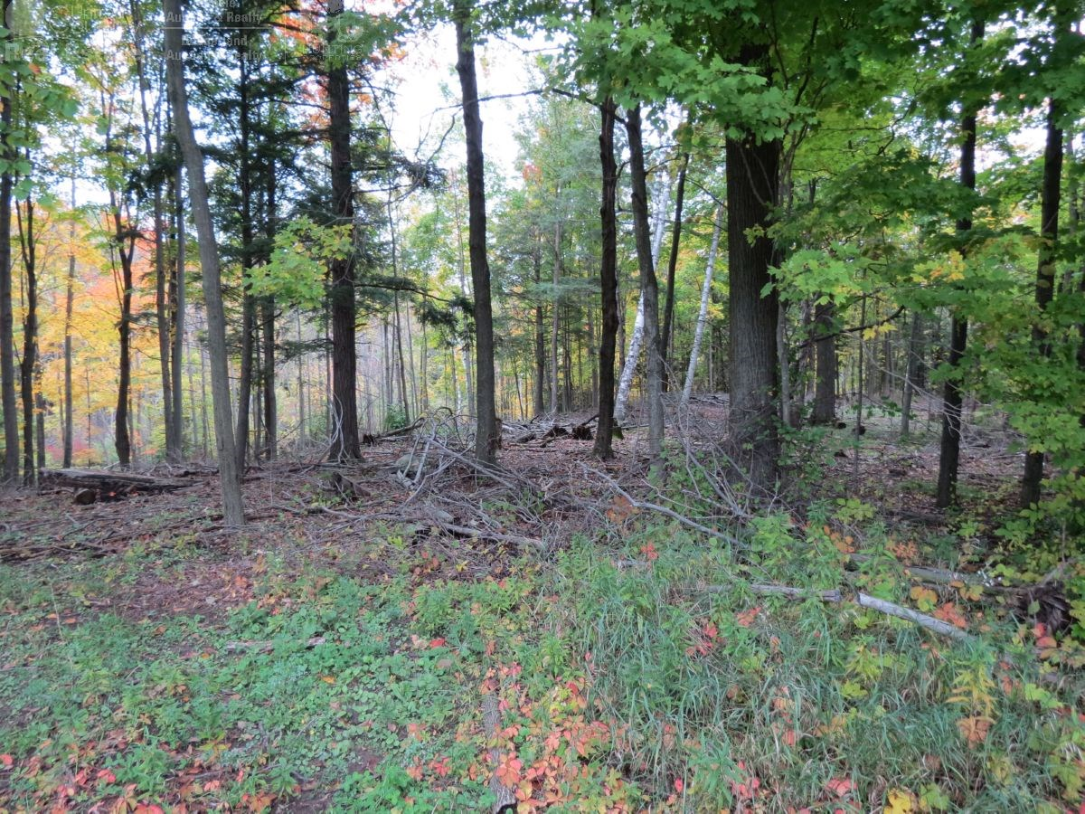 52 Acre Manitowoc County Land Auction Online Only