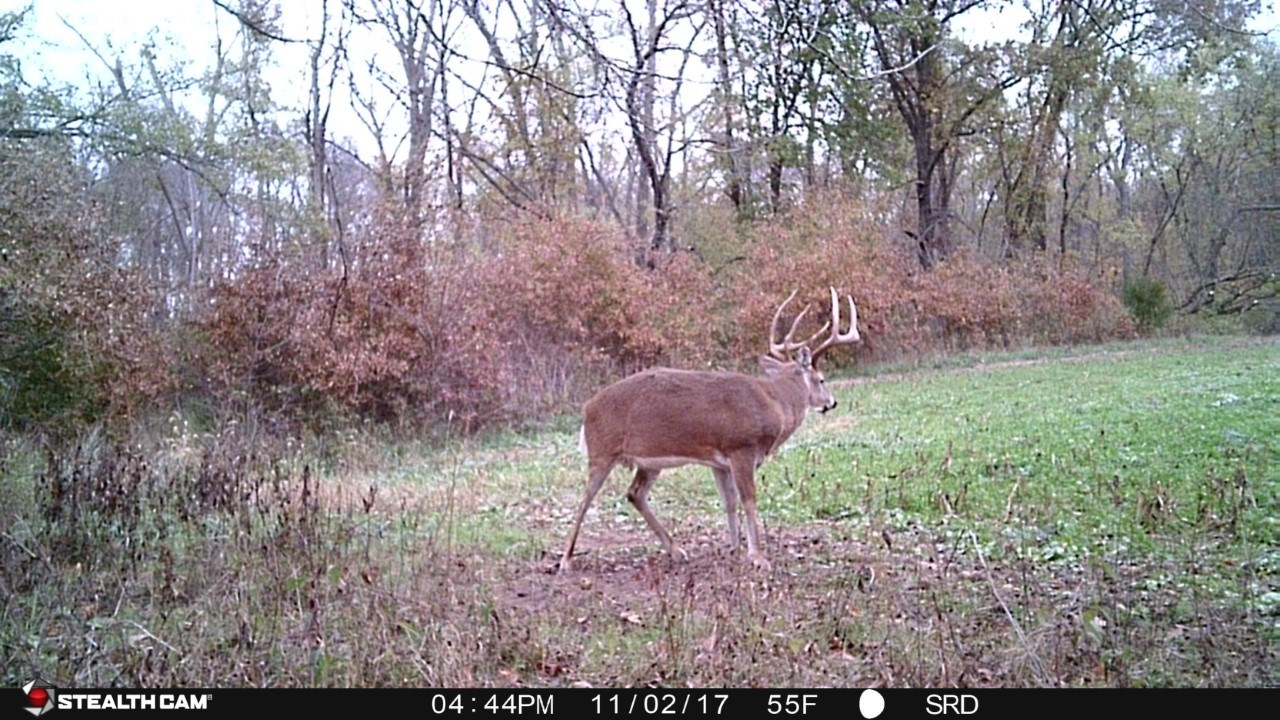 Van Buren Co. IA Hunting Land With Income For Sale