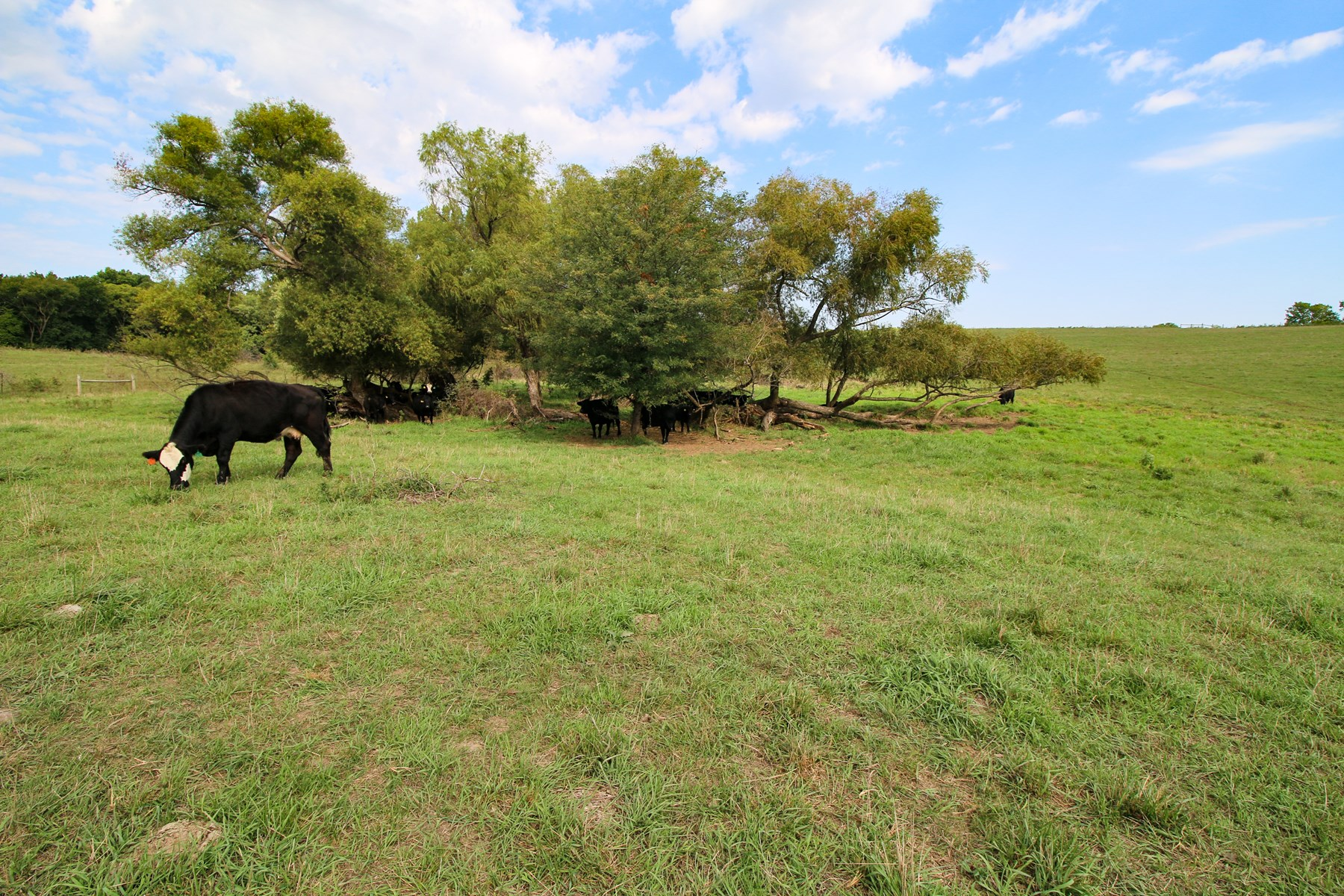 Kansas City Pasture Land For Sale at Auction