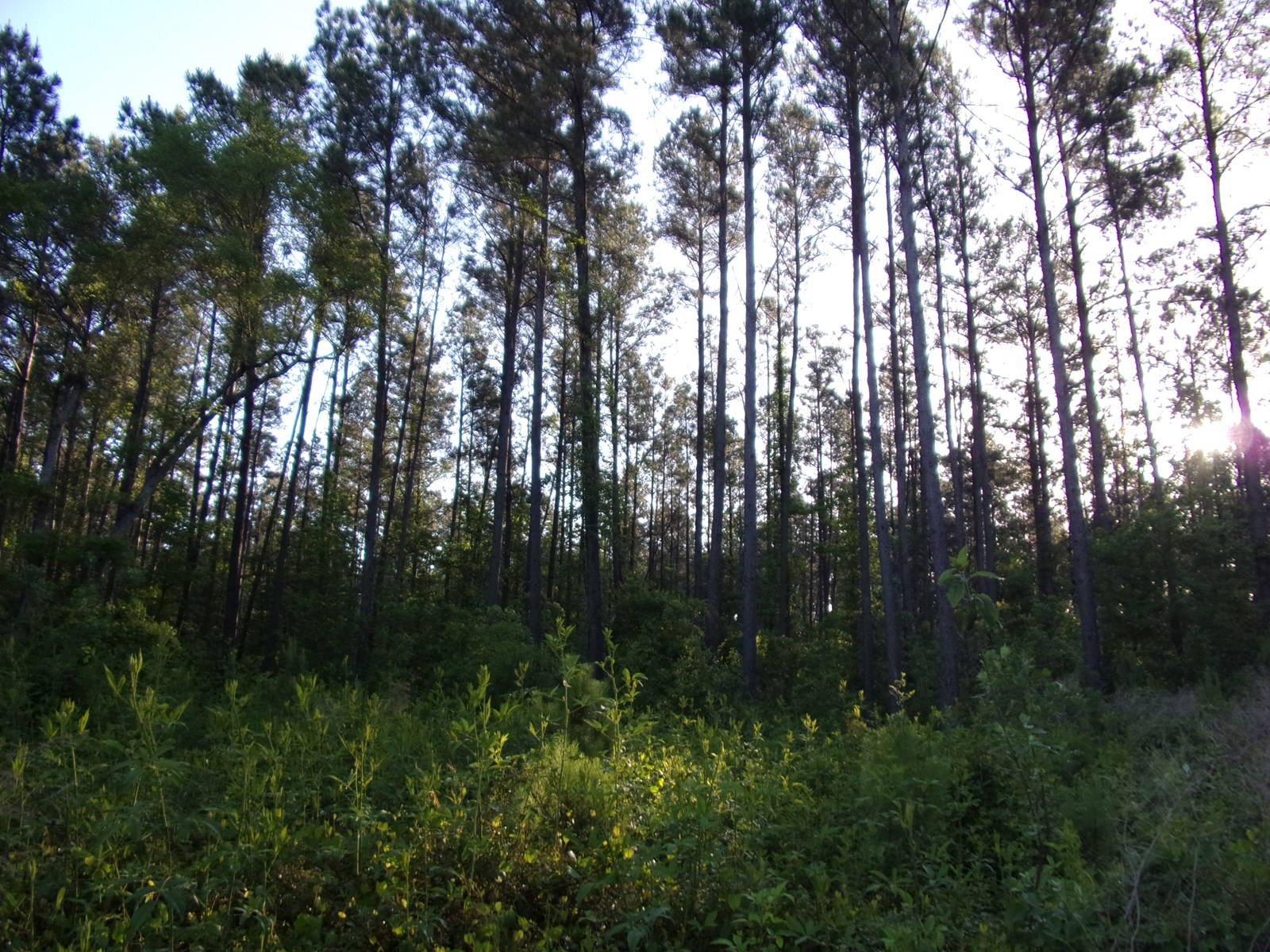 70 +/- Acres of Land for Sale Brooklet, GA, Bulloch County