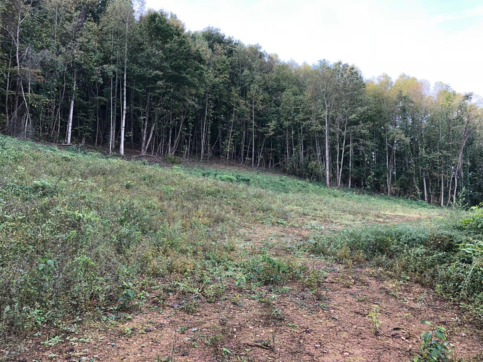 4.4 surveyed acres of unrestricted land in Whitesburg