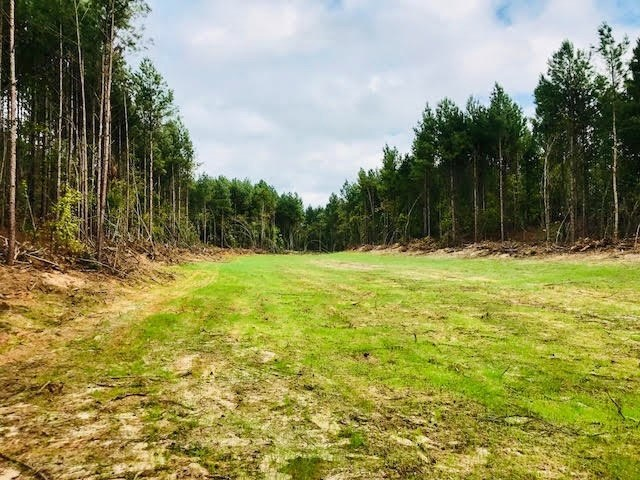 REDUCED! 104 Acres Timberland for Sale Montgomery County, MS