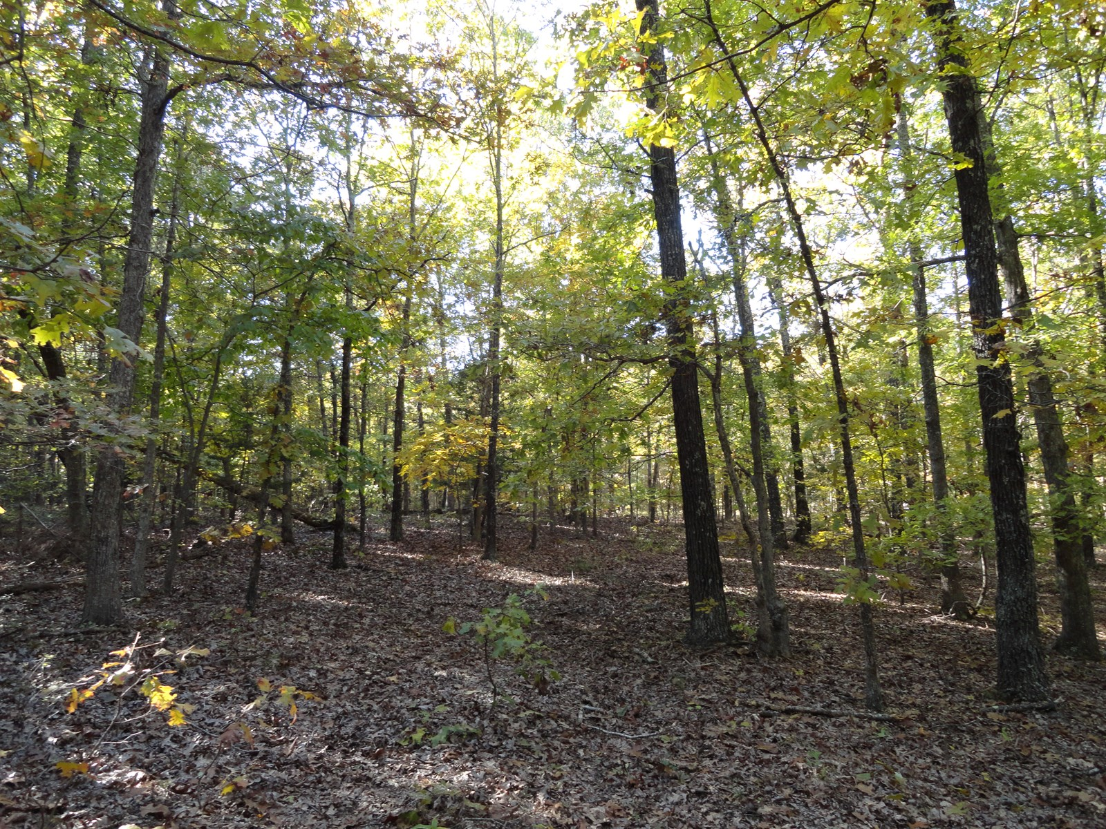 46.92 WOODED ACRES LOCATED JUST 7 MILES FROM SALEM, MISSOURI
