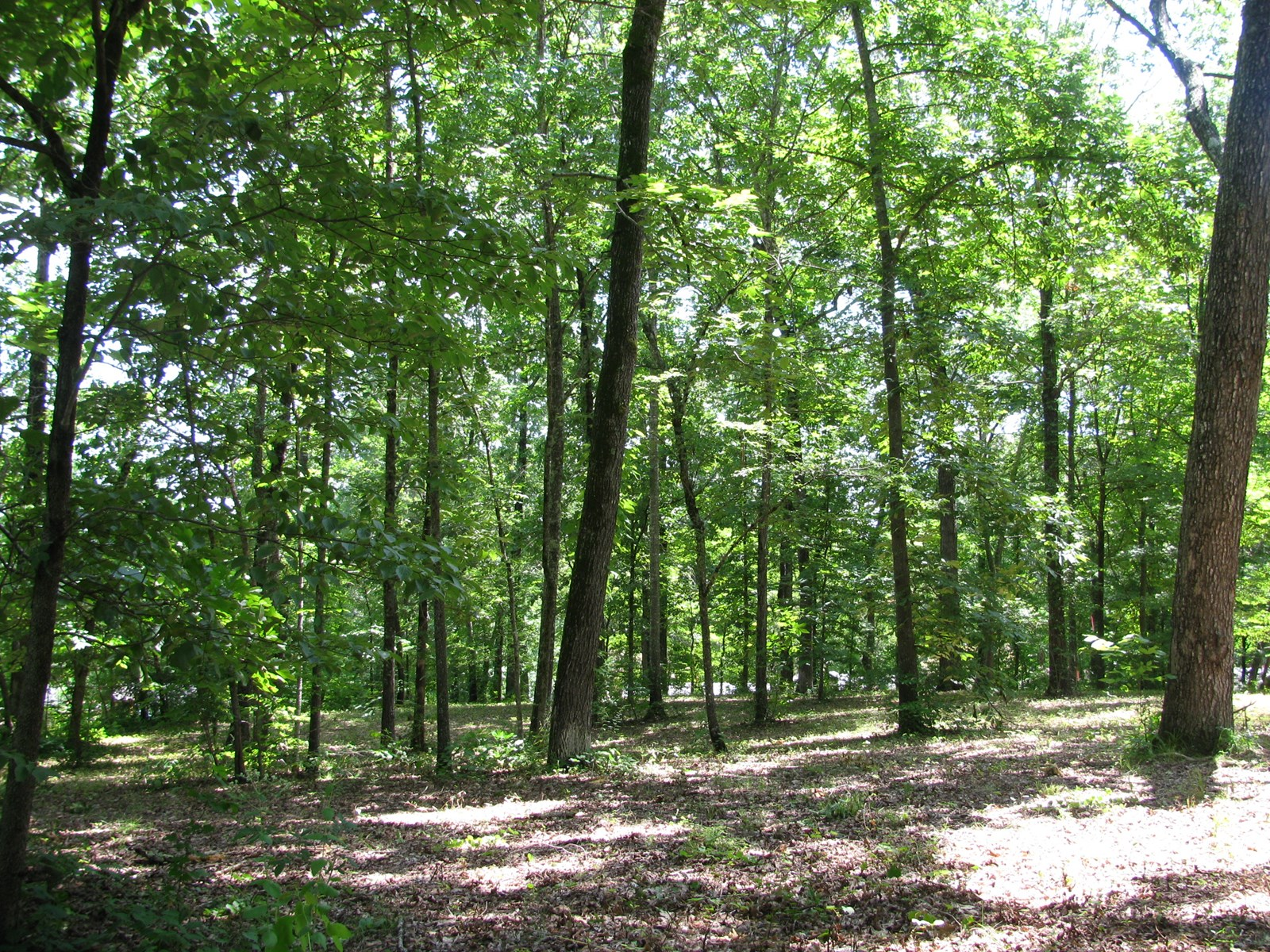 LOT FOR SALE IN ADAMSVILLE TN, DICKEY WOODS, LOT TO BUILD ON