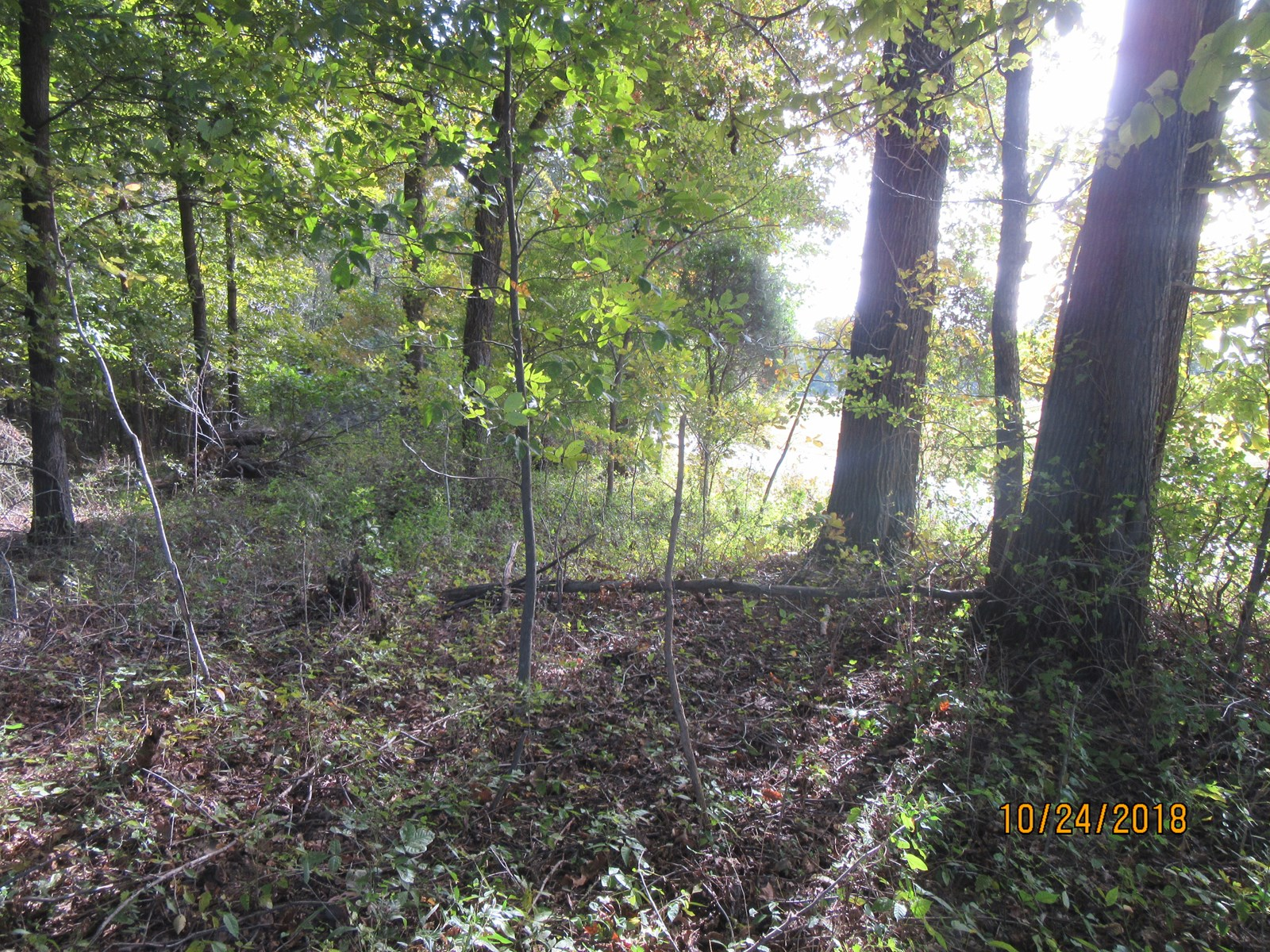 Land To Call Your Own - 10 Acres Metropolis, IL