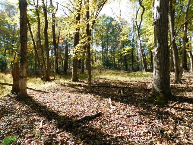 Land For Sale in Springfield, WV