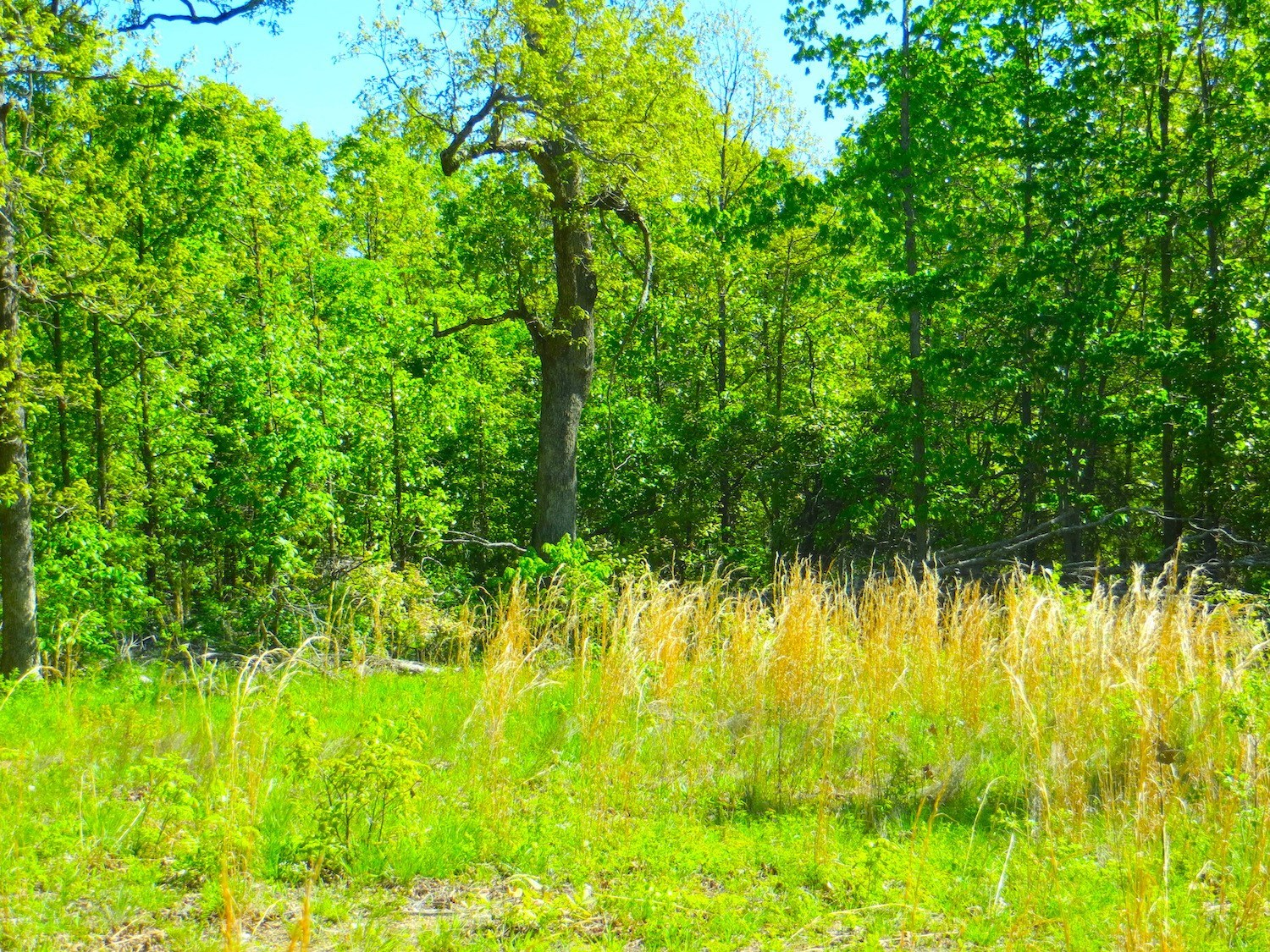 Acreage-Hunting-Timber for Sale
