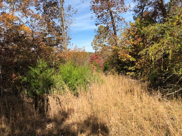 Vacant Land for Sale in Arkansas