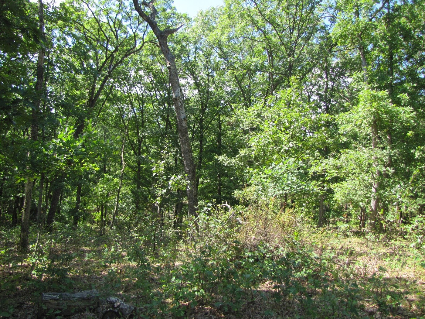 20 +/- Acres Timber Land, Northeast MO Hunting Property