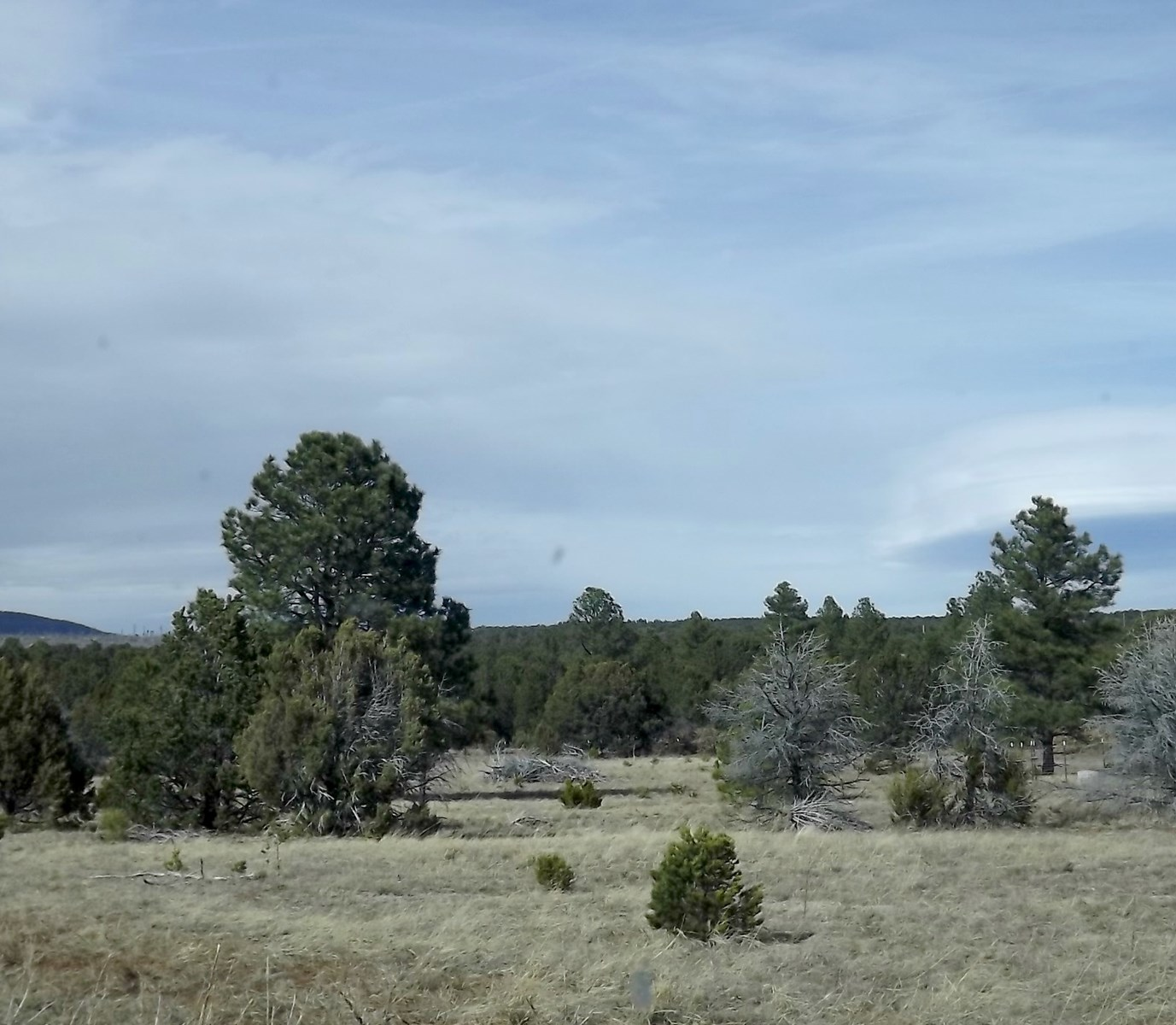 New Mexico Remote Secluded Wooded Acreage For Sale 34 Acres