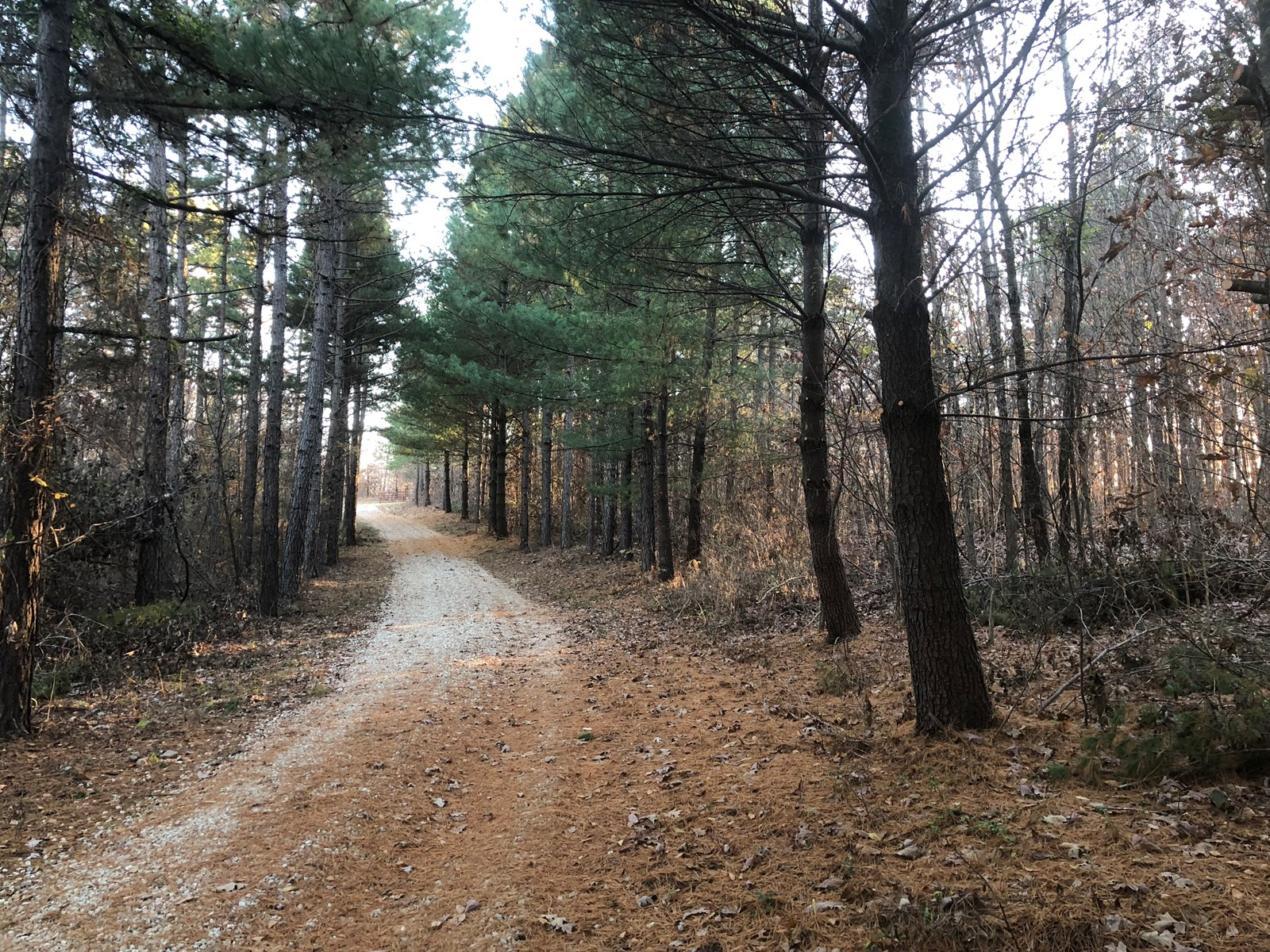 Hunting Property For Sale in Bollinger County, Missouri