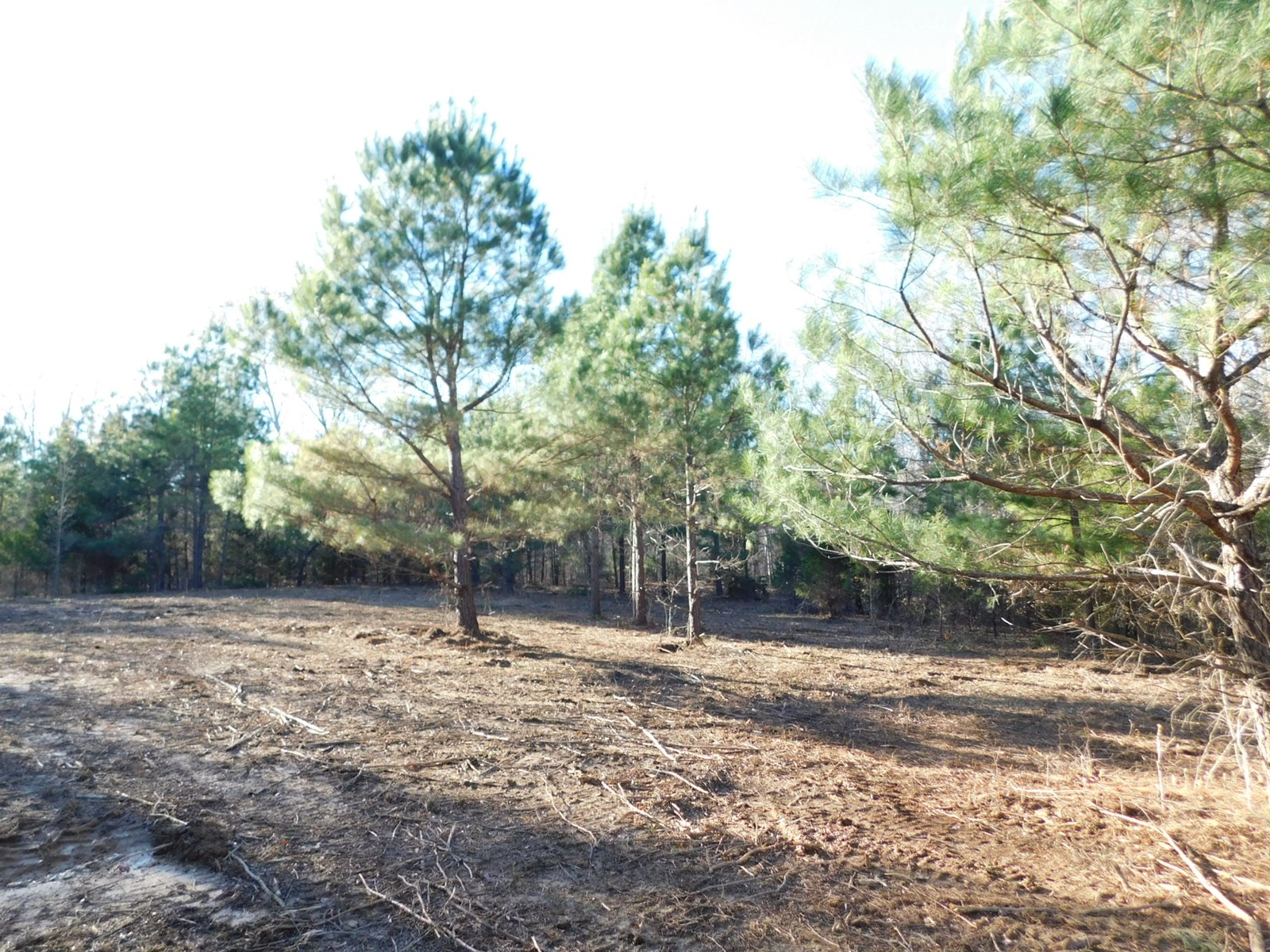 LAND FOR SALE IN TN NEAR SHILOH NATIONAL MILITARY PARK