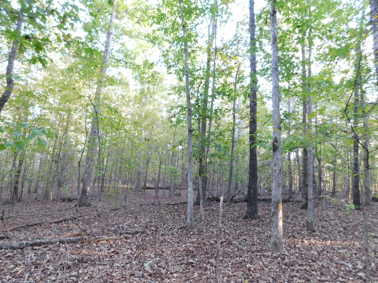 LAND FOR SALE IN TN NEAR FISHING WITH UTILITIES AVAILABLE