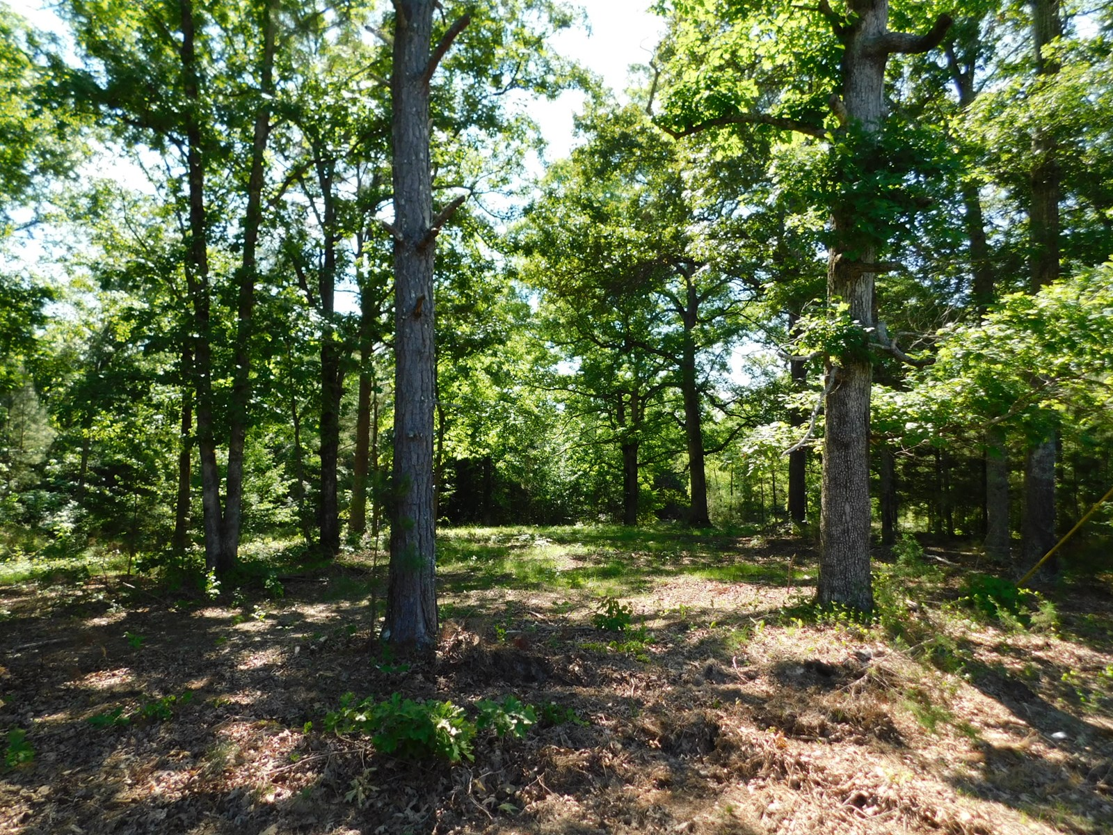 LAND FOR SALE IN TN NEAR SHILOH TO BUILD A CABIN OR HOME ON
