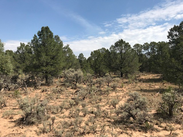 land for sale surrounded by Carson National Forrest Canjilon