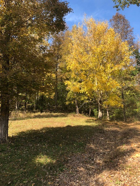 21.86 Acres Buildable Hunting Land w/Water & Electric