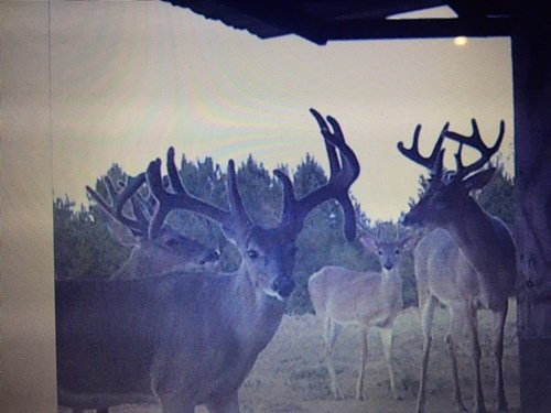 World Class Mississippi Hunting Property SW MS