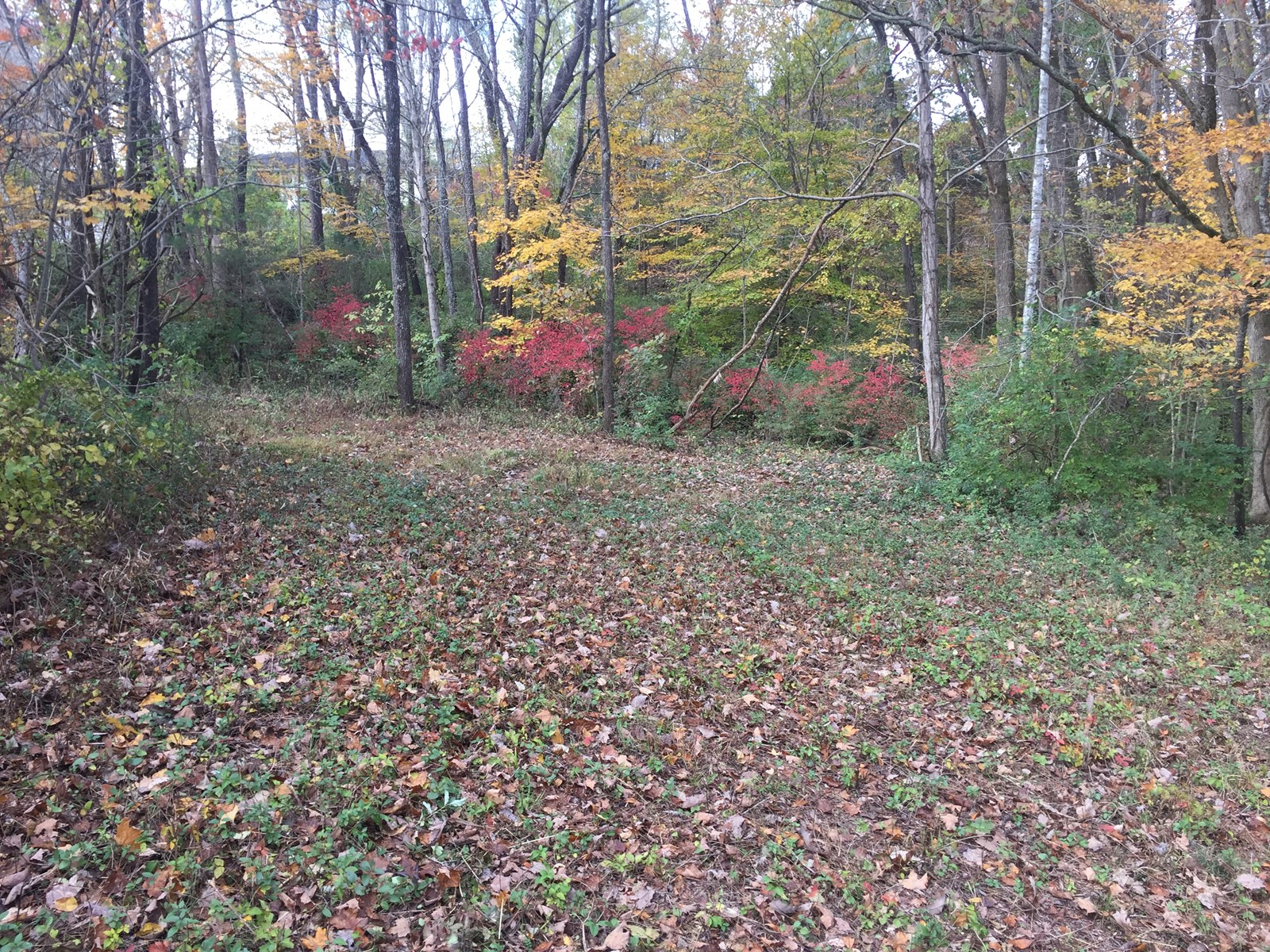 3 LOTS IN RIVERVIEW ESTATES - LIBERTY KENTUCKY