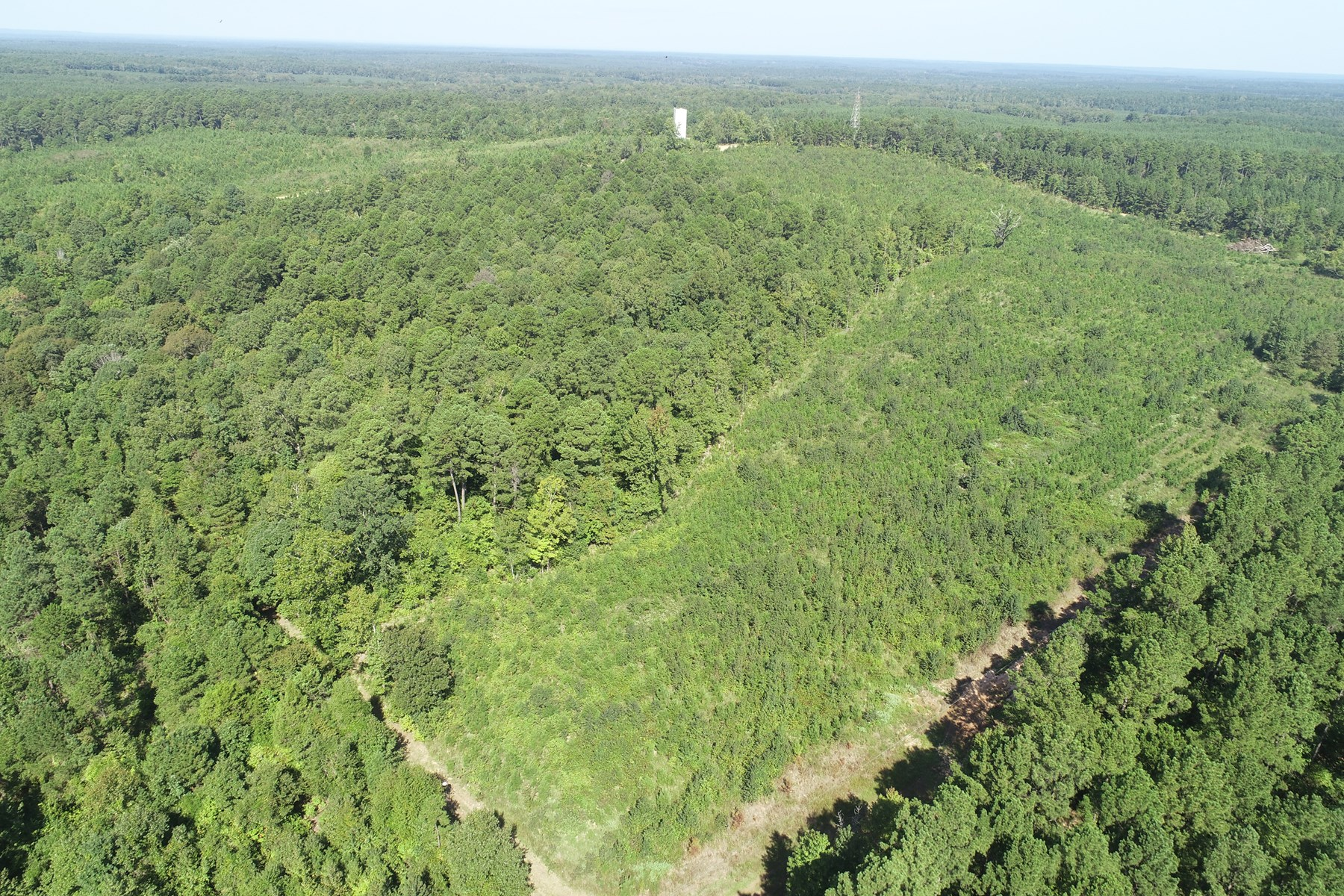 Recreational Pine Timberland for Sale near Sparkman, AR