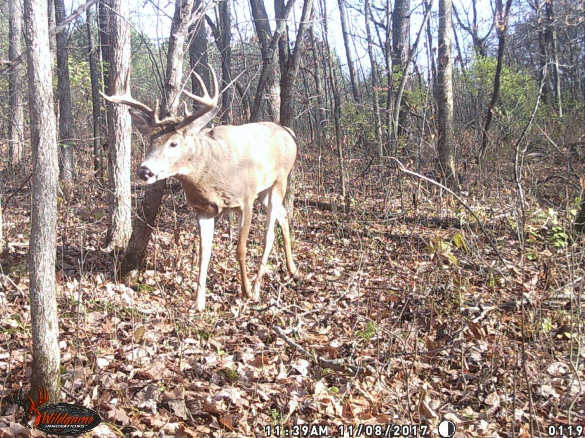 Whitetail Deer Hunting Land For Sale