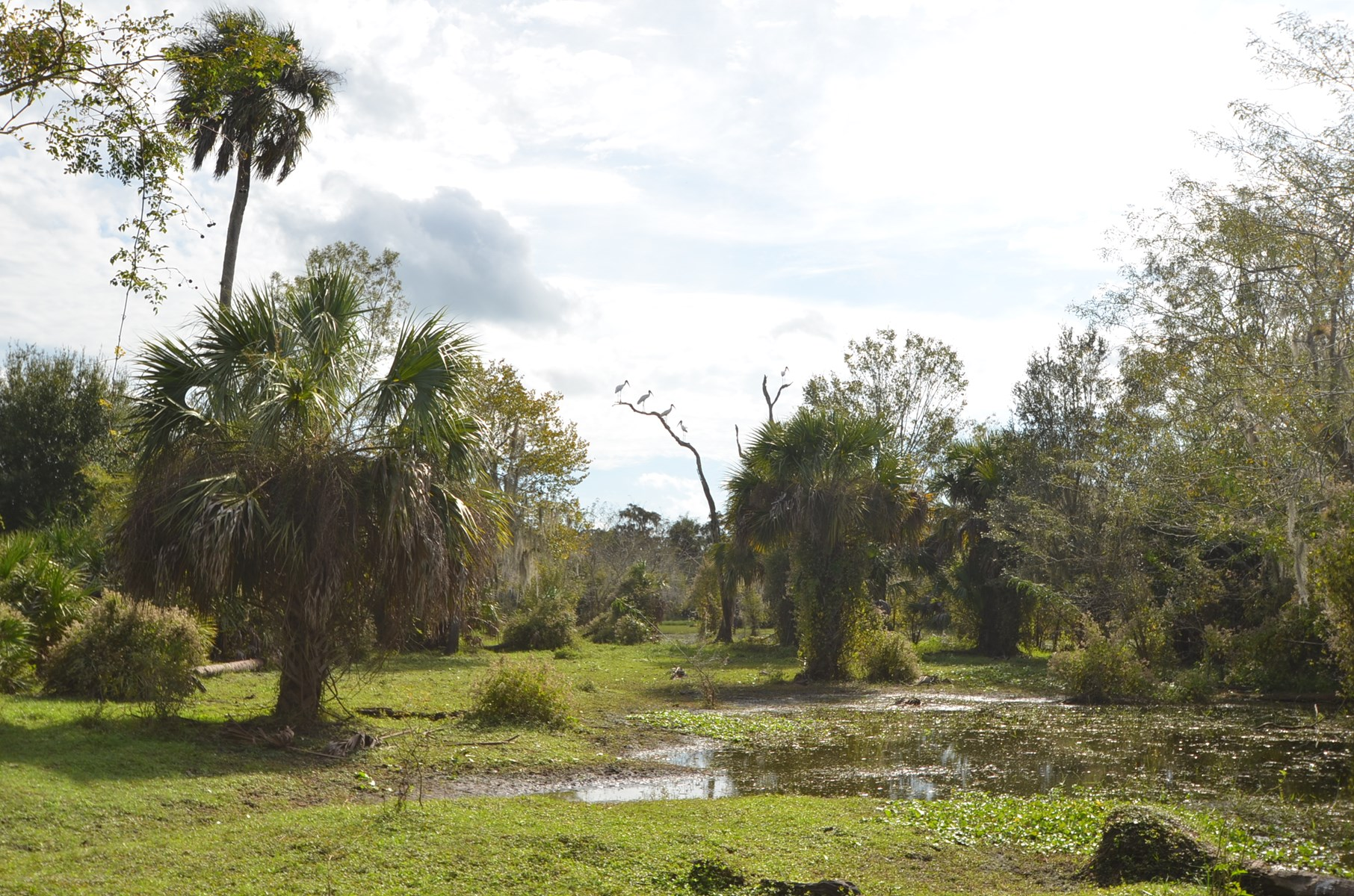 Peace River Hunting Recreation 875 ac for sale SW Florida