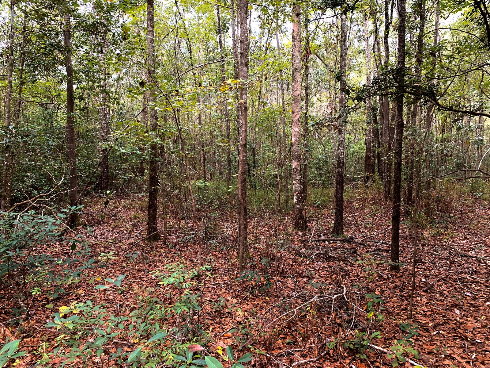 34 ACRES FOR SALE MALVERN, ALABAMA