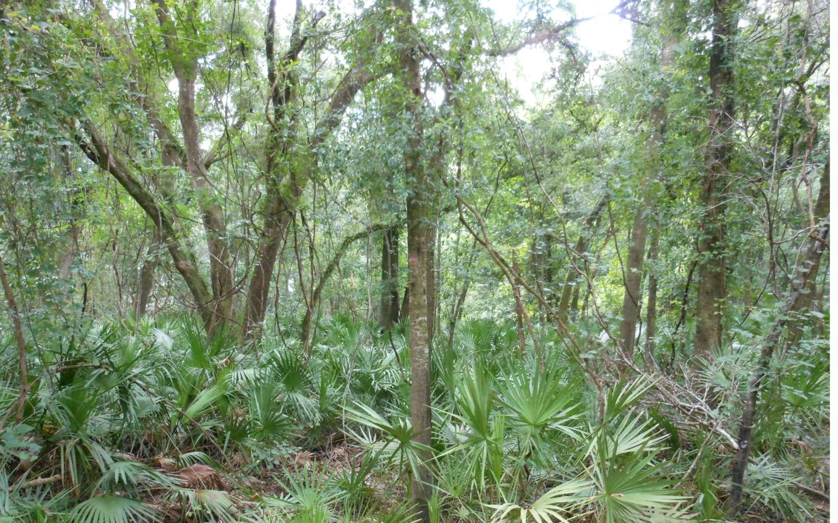 Completely wooded lot in a river community