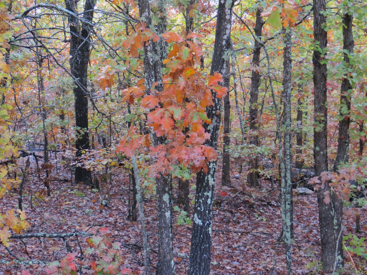 Timberland Property for Sale in Missouri