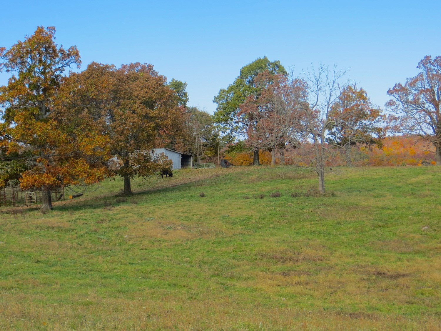 Farm for Sale in