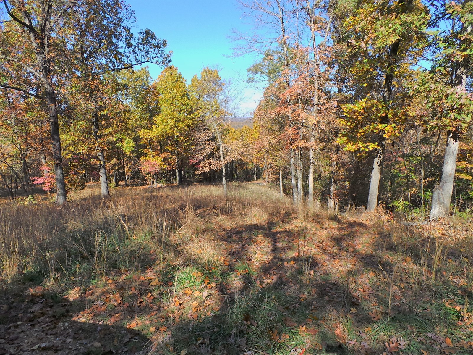 Land for Sale in Flippin Arkansas