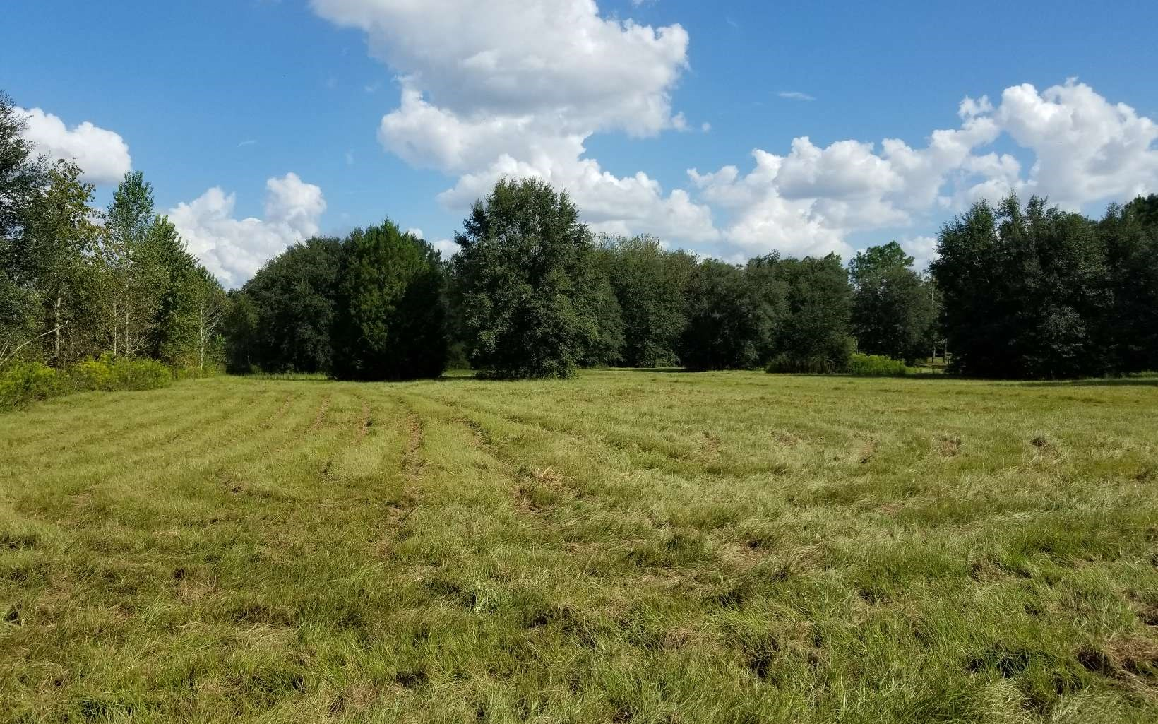 Great 5 ac area for horses