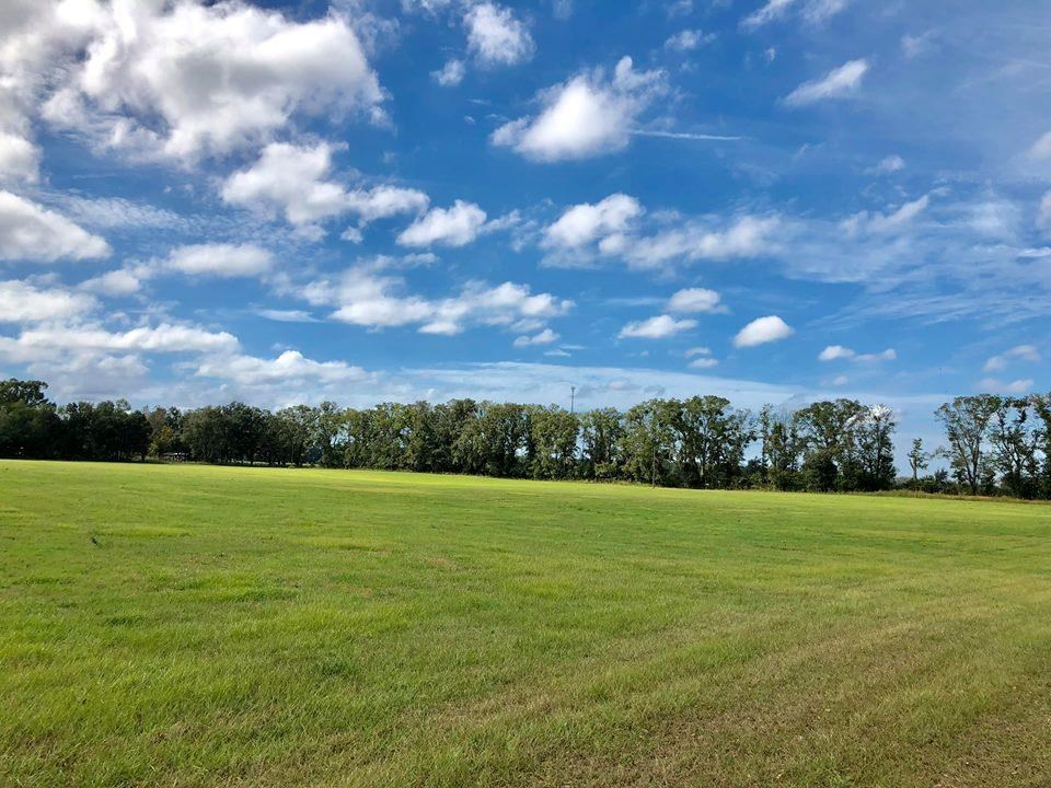 Levy County Fl, Land for sale 74 acres. BRING ALL OFFERS