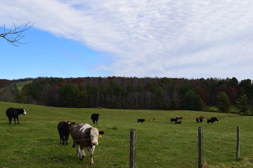 Floyd Va Farm Land with Water & Building Site for Sale