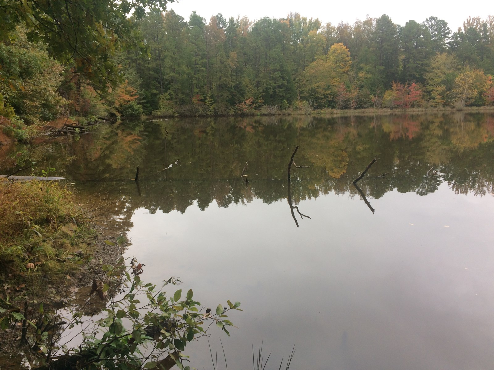 14 Wooded Acres for Sale  in Chester Co.,TN with Lake