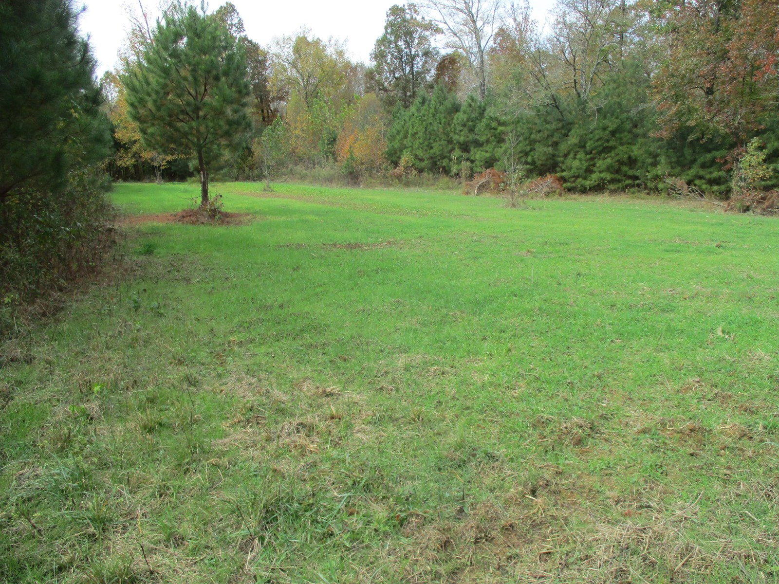 36 Acre Hunting Property; southern McNairy County, TN