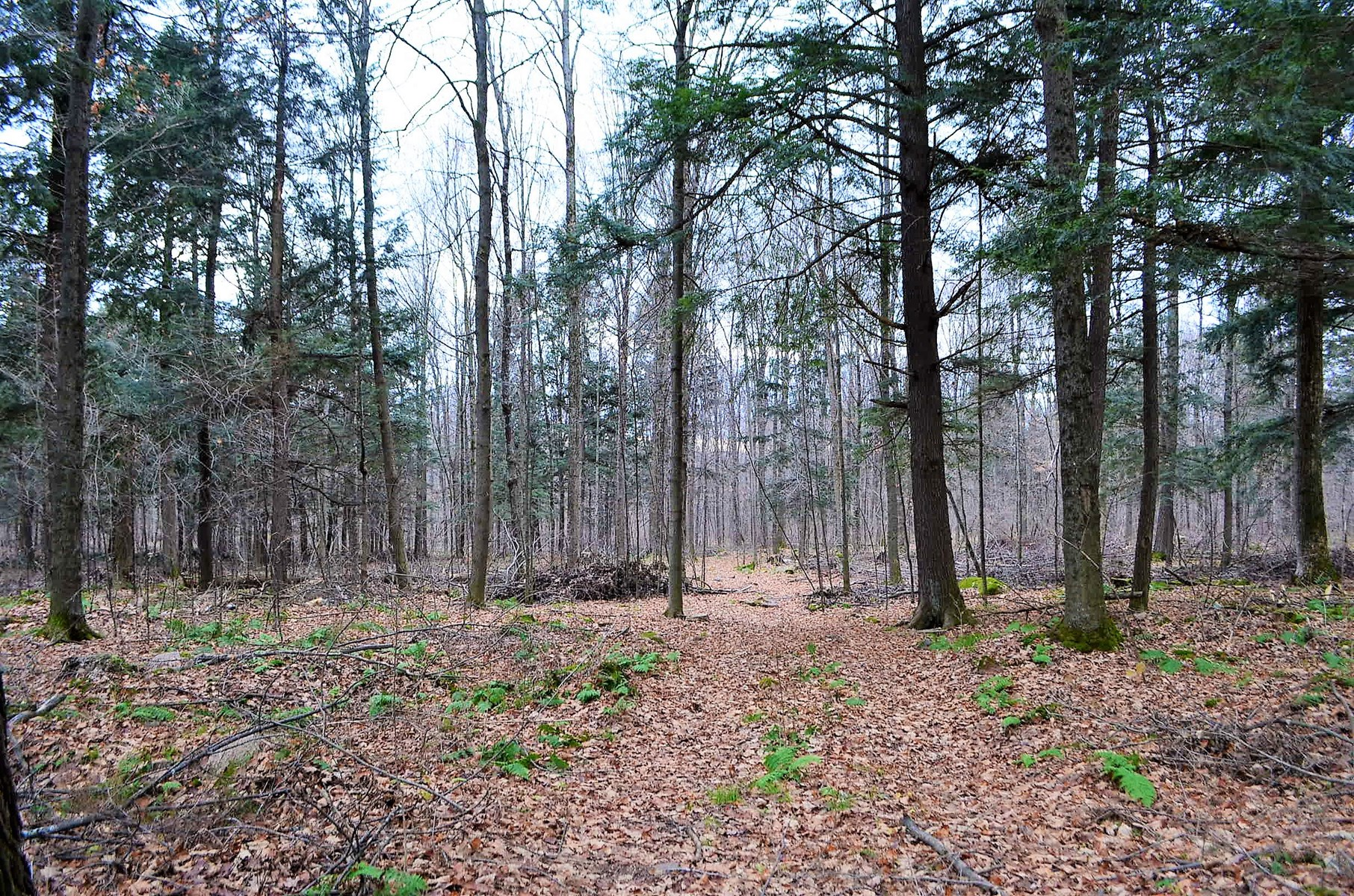 Building and Hunting Wooded 38 Acre parcel in Marathon