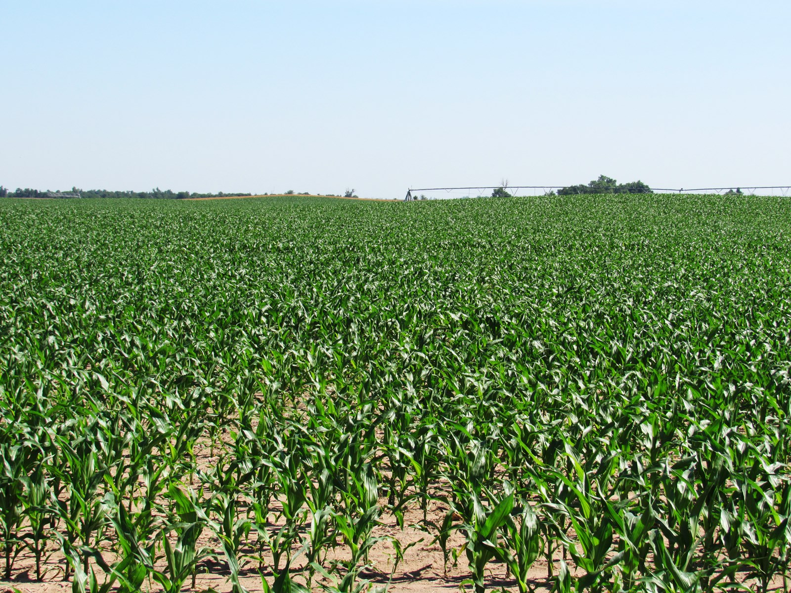 Irrigated Cropland Auction in Stafford County, Kansas
