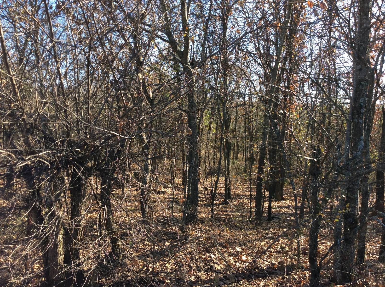 25 Acres Wooded Land