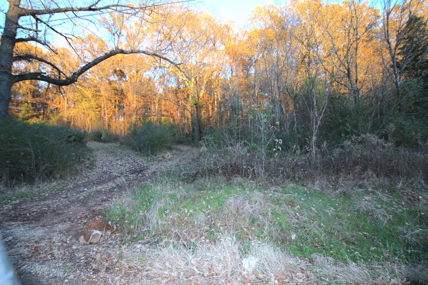 Lot for sale in Thayer, MO