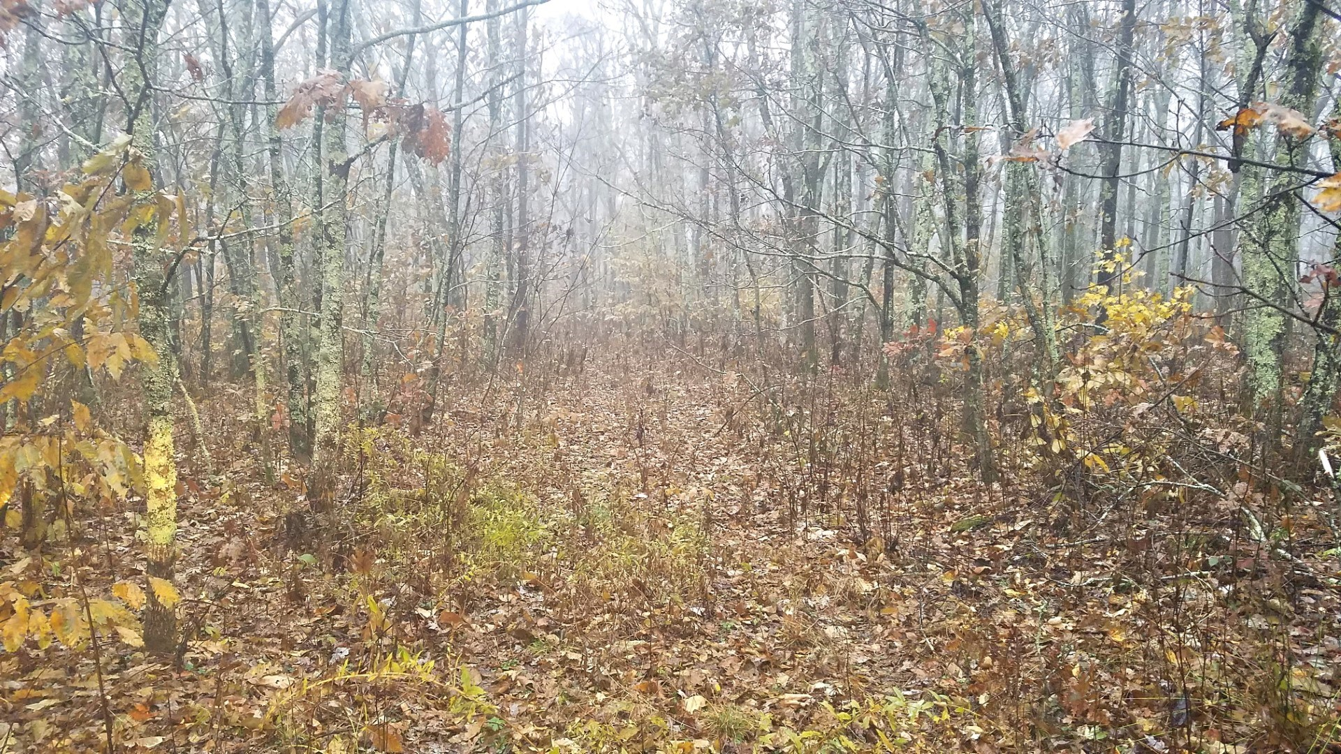 46 Acres Wooded Hunting Land Cove Creek, Bastian, VA