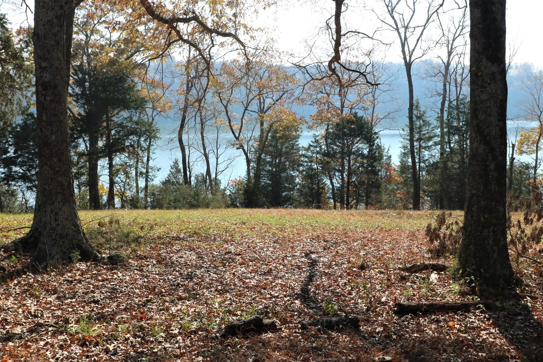 41.28 acres Lake front Property Lake Cumberland Nancy KY
