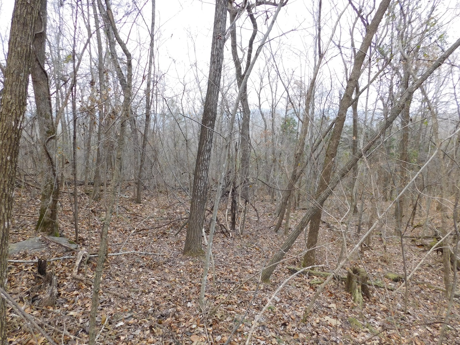 Wooded Acreage Near Buffalo River National Park Newton Co