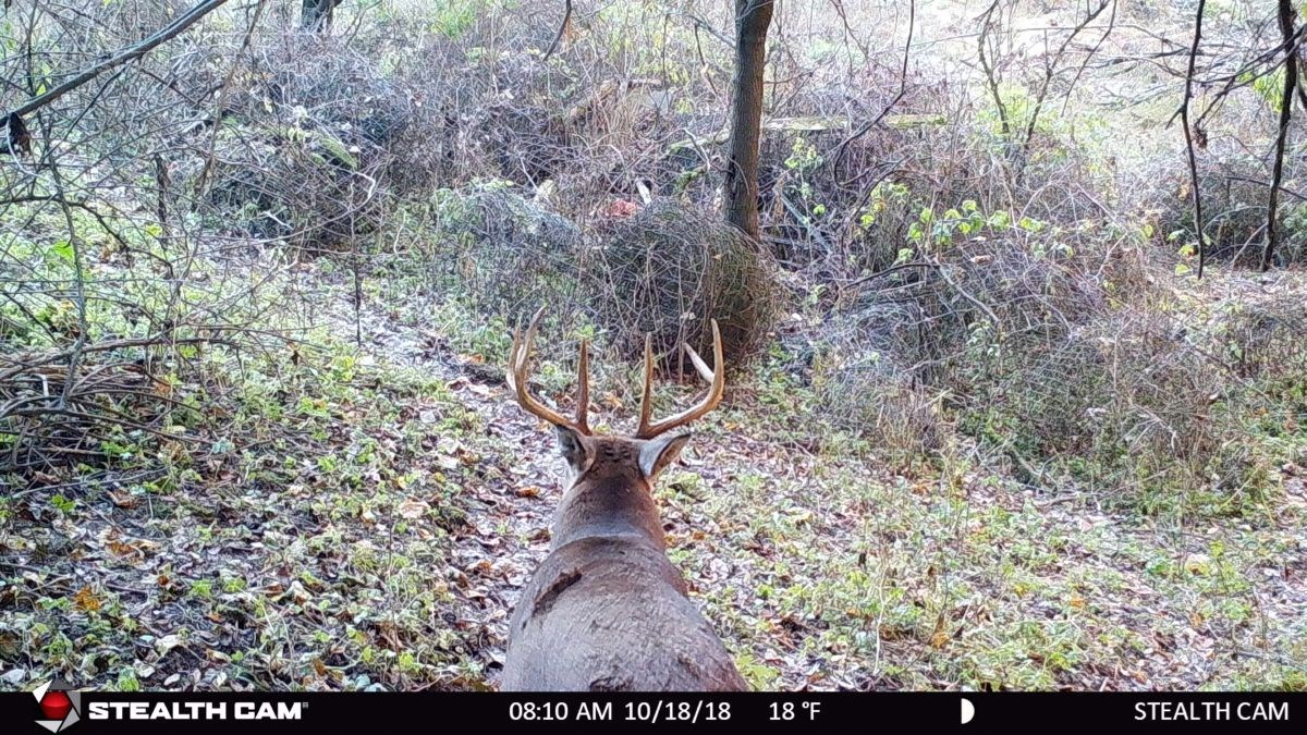 Monumental Deer Hunting Land For Sale in Southwestern WI