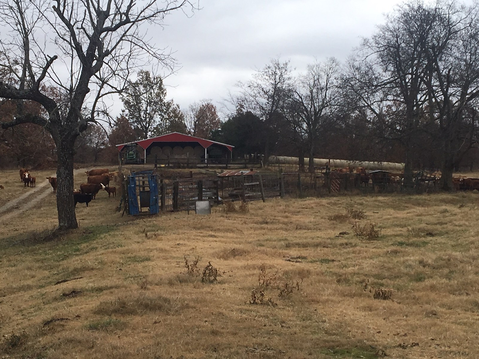 Cattle Farm in Randolph County Arkansas