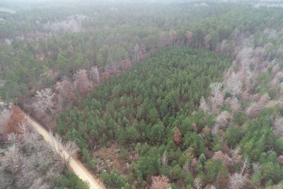 Young Planted Pine Timber Parcels for Sale by Chidester, AR