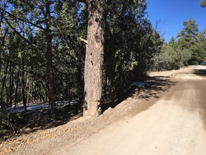 NM MANZANO MOUNTAIN WOODED LOT FOR SALE SOUTH OF TIJERAS